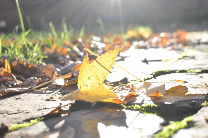 autumn leaves in melbourne australia