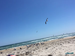 beach day in Australia